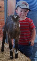Young boy with farm animal