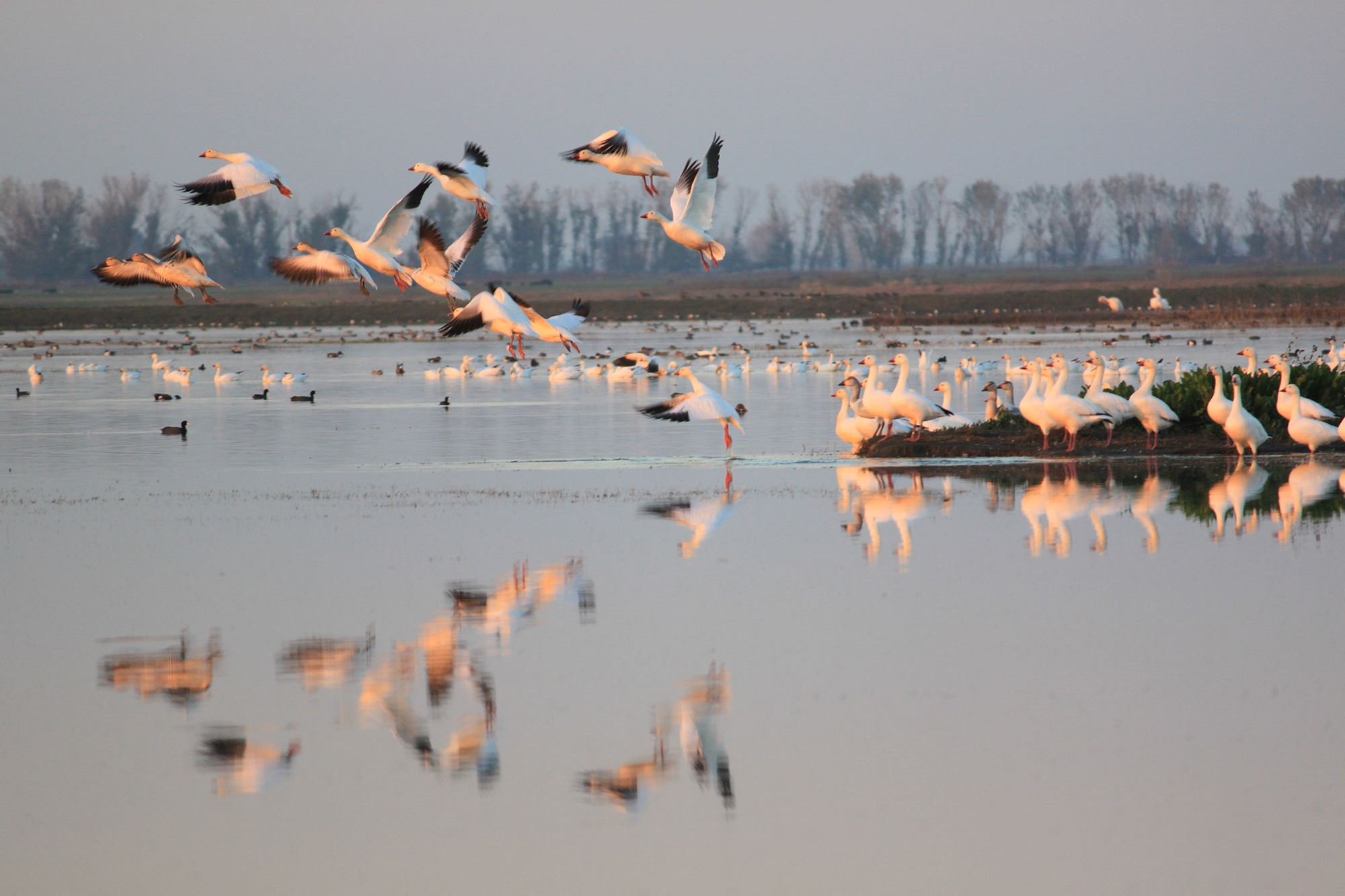 Merced National Wildlife Refuge