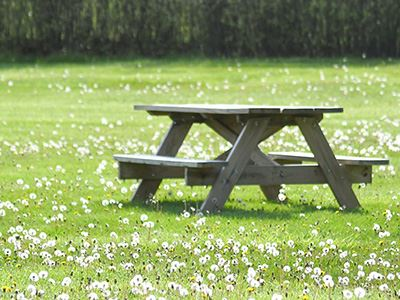 Park Bench in Green Grass